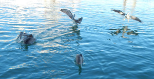 Nikonfishing 028detailsm