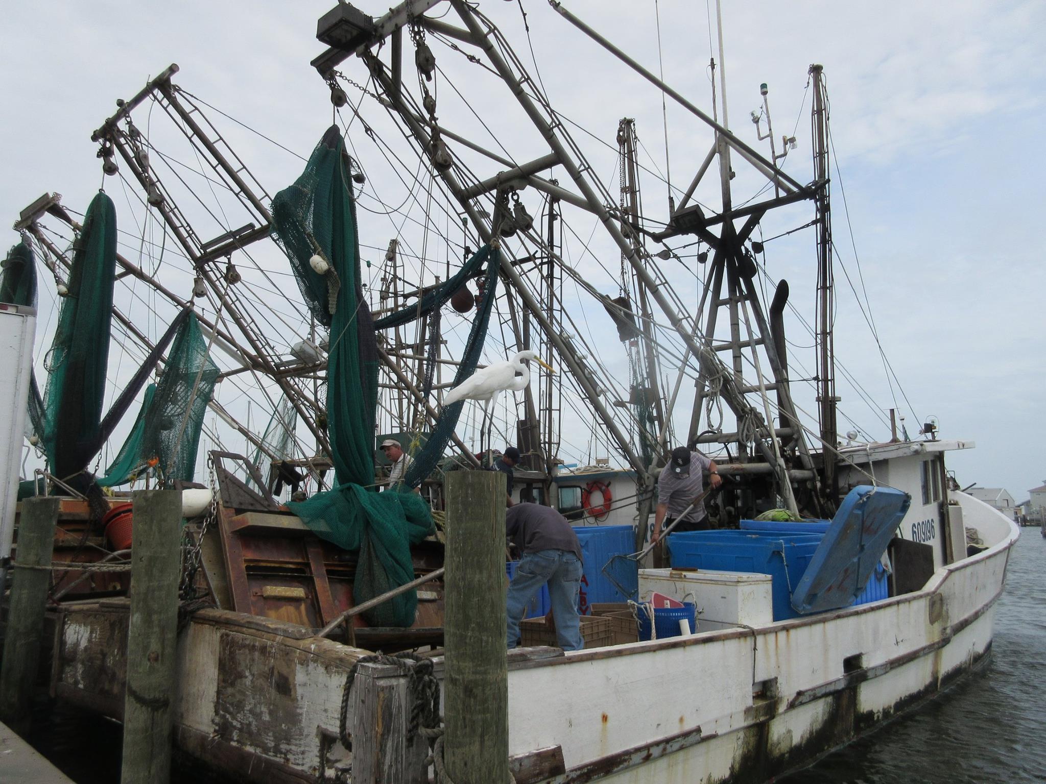 ShrimpboatEgret